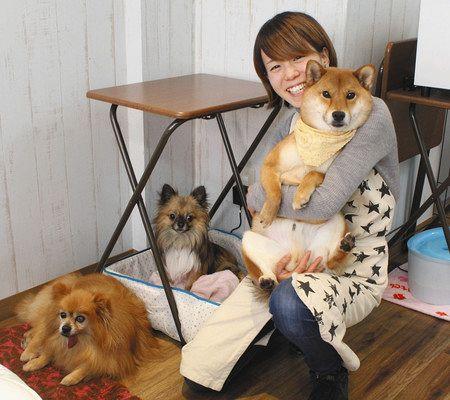 柴犬 保護 犬