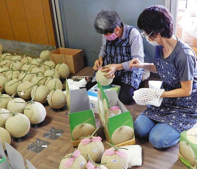 しっとりした甘さが特長で口当たりも良い「宮前メロン」の収穫と出荷が二十五日、川崎市宮前区のメロン農家で始まった。今年は五月中旬に気温の...