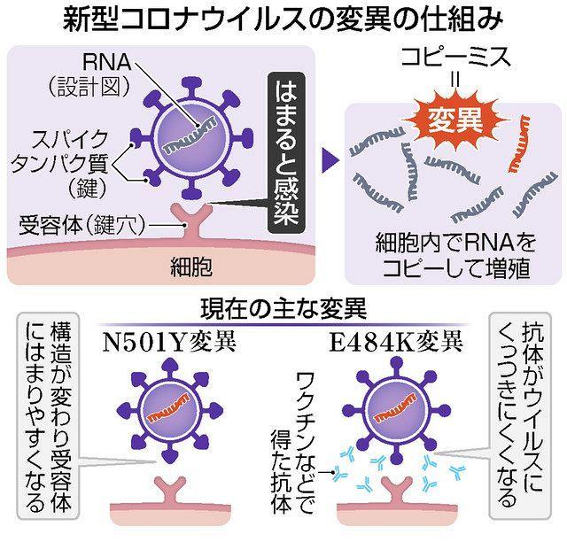 変異 コロナ ウイルス 突然 コロナウイルスが突然変異で毒性高まって殺人ウイルスになって人類滅
