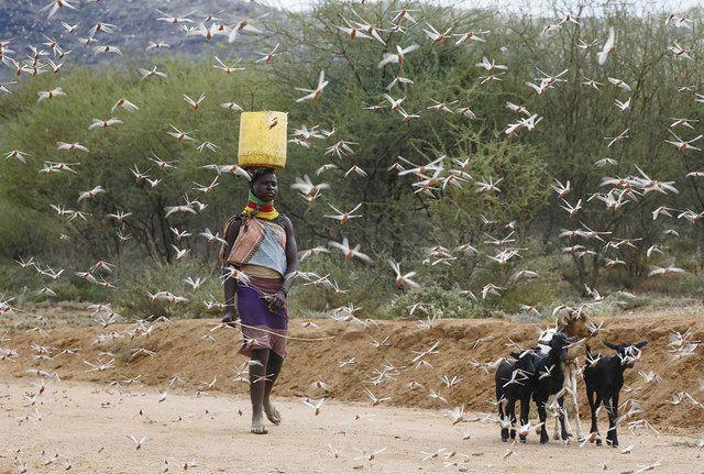 どう 大群 なっ の た バッタ イナゴの大群、新たに大発生の予兆。国連「資金がない。駆除できなくなる」とSOS(今井佐緒里)