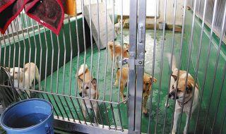 犬猫の殺処分「ゼロ」は見せかけ? 実は568匹処分 茨城県の独自基準を愛護団体が批判